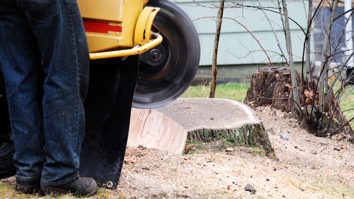 emergency tree removal houston